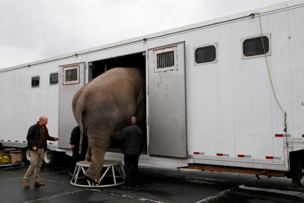 A performing elephant is loaded on to a truck following its final show for the Ringling Bros and Barnum & Bailey Circus in Wilkes-Barre, Pennsylvania, U.S., May 1, 2016. REUTERS/Andrew Kelly - RTX2CDEN