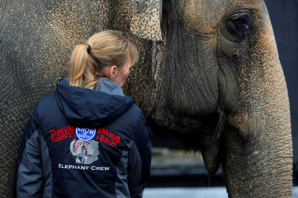 Elephant crew member Viki Zsilak comforts an elephant before loading it on to a truck following its final show for the Ringling Bros and Barnum & Bailey Circus in Wilkes-Barre, Pennsylvania, U.S., May 1, 2016. REUTERS/Andrew Kelly - RTX2CDF4