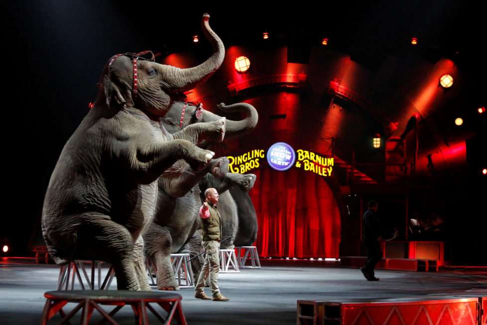 "Elephants perform during Ringling Bros and Barnum & Bailey Circus' ""Circus Extreme"" show at the Mohegan Sun Arena at Casey Plaza in Wilkes-Barre, Pennsylvania, U.S., April 30, 2016. To match Feature USA-CIRCUS/ELEPHANTS REUTERS/Andrew Kelly - RTX2C9PD"