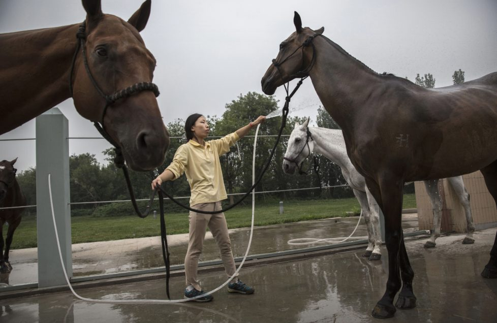 """TIANJIN, CHINA - JULY 17: A Chinese horse trainer washes polo horses after exercise at the Tianjin Goldin Metropolitan Polo Club on July 17, 2016 in Tianjin, China. China's rising affluence has nurtured growing interest in polo and other past-times regarded as noble or prestigious by the country's elite. Clubs and international-size polo fields have been built in various cities including Beijing and Shanghai, and on the outskirts of Tianjin, where membership at the exclusive Goldin Metropolitan, China's largest polo club, is by invitation-only and fees can be significant for polo team owners. Increasingly, wealthy Chinese parents are choosing polo and other equestrian activities for their children as a way to bolster their credentials for admission to top-tier universities in the United States and the United Kingdom. While the so-called """"sport of kings"""" became a mainstay in Hong Kong during the era of British rule, polo is a relatively new sport to mainland China. Professional polo players are frequently flown in from countries such as New Zealand and Argentina in order to field competitive matches. Many of the polo clubs in China are tied to luxury real estate developments. (Photo by Kevin Frayer/Getty Images)"""