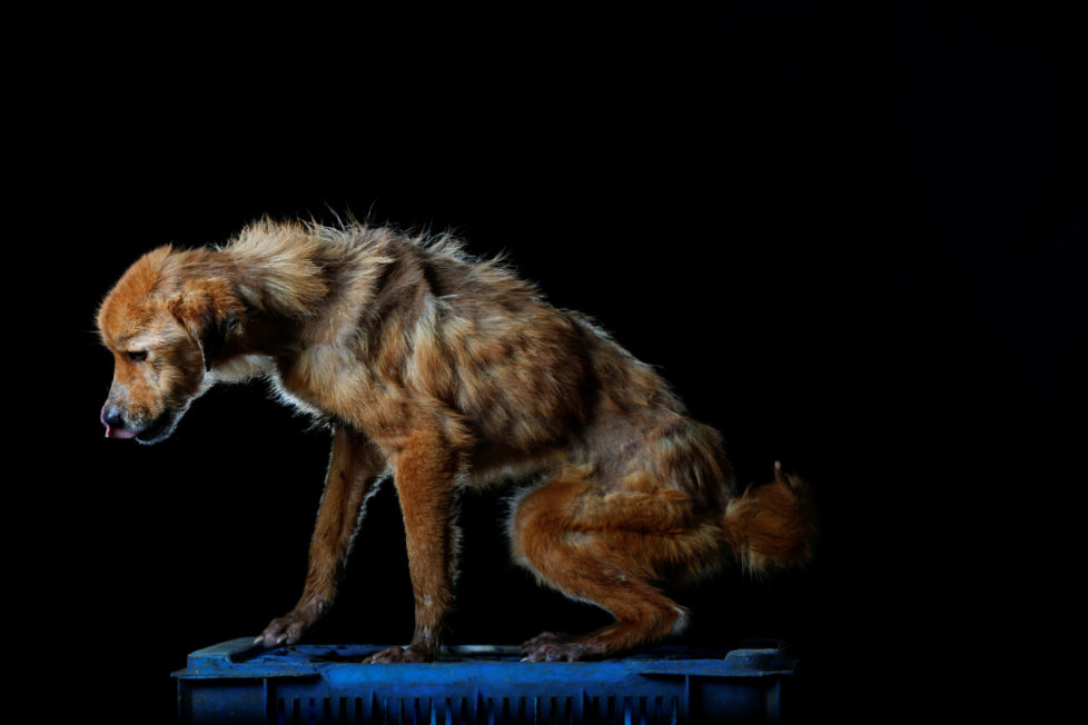 """La China is pictured at the Famproa dogs shelter in Los Teques, Venezuela August 16, 2016. La China died the following week after the photo was taken. """"The loving but fearful dog did not like to leave the space where she slept, even to eat,"""" said Maria Silva who takes care of dogs at the shelter. REUTERS/Carlos Garcia Rawlins SEARCH """"DOG LIFE"""" FOR THIS STORY. SEARCH """"WIDER IMAGE"""" FOR ALL STORIES. TPX IMAGES OF THE DAY - RTX2OI3I"""
