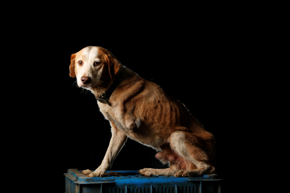 """Atro is pictured at the Famproa dogs shelter in Los Teques, Venezuela August 18, 2016. Atro was given his name for Atropelledo (run over). """"A few years ago someone left him outside the shelter after he was hit by a car. He underwent several surgeries to try to save his leg, but it was not possible. Since then he has been very lonely, he does not like to interact with other dogs,"""" said Maria Silva who takes care of dogs at the shelter. REUTERS/Carlos Garcia Rawlins SEARCH """"DOG LIFE"""" FOR THIS STORY. SEARCH """"WIDER IMAGE"""" FOR ALL STORIES. - RTX2OI4P"""