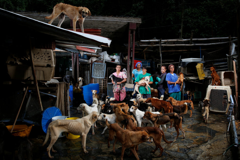 """(L-R) Maria Silva, Milena Cortes, Maria Arteaga, Jackeline Bastidas and Gissy Abello pose for a picture at the Famproa dogs shelter where they work, in Los Teques, Venezuela, August 25, 2016. REUTERS/Carlos Garcia Rawlins       SEARCH """"DOG LIFE"""" FOR THIS STORY. SEARCH """"WIDER IMAGE"""" FOR ALL STORIES.      TPX IMAGES OF THE DAY  - RTX2OI5B"""