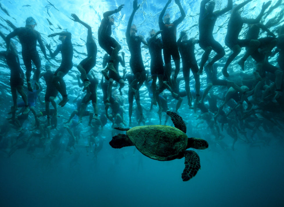 KAILUA KONA, HI - OCTOBER 08: In this handout photo provided by IRONMAN. The green sea turtle, also known as 'Honu', is a symbol of good luck and longevity in Hawaiian lore. This native friend provides a little mystique to the 2,300 athletes who await the start signal of a 140.6-mile journey at the 2016 IRONMAN World Championship triathlon on October 8, 2016 in Kailua Kona, Hawaii. (Photo by Donald Miralle/IRONMAN via Getty Images)